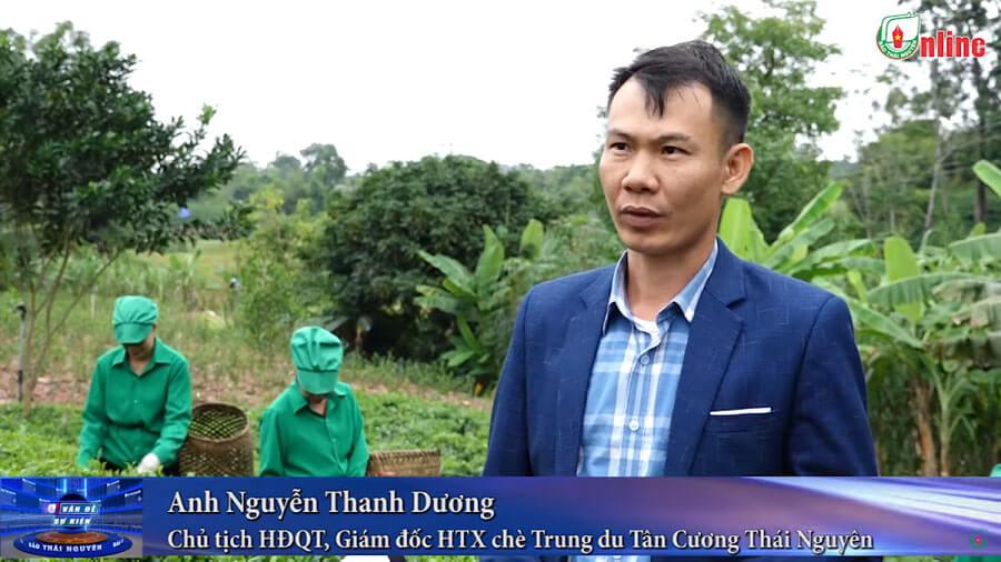 Người gìn giữ và bảo tồn chè trung du Tân Cương – HTX chè Trung Du Tân Cương